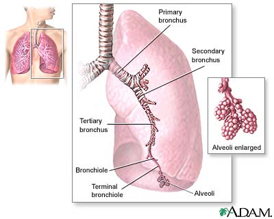 Labeled Lungs